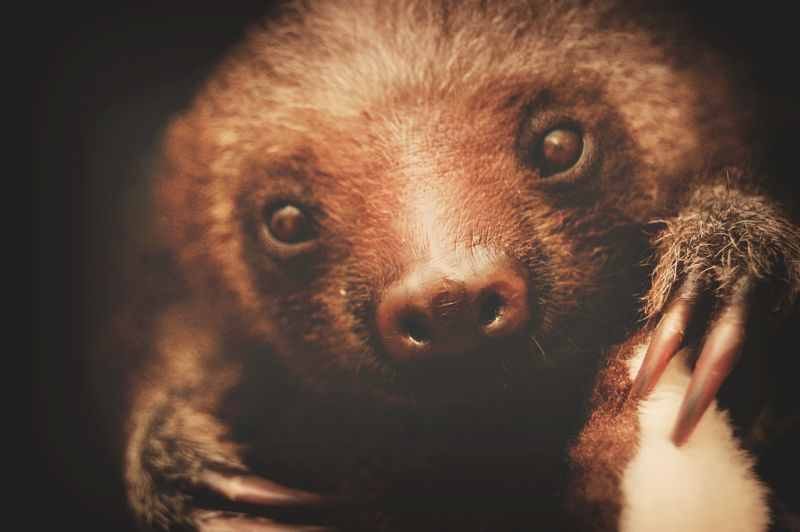 3 sloth