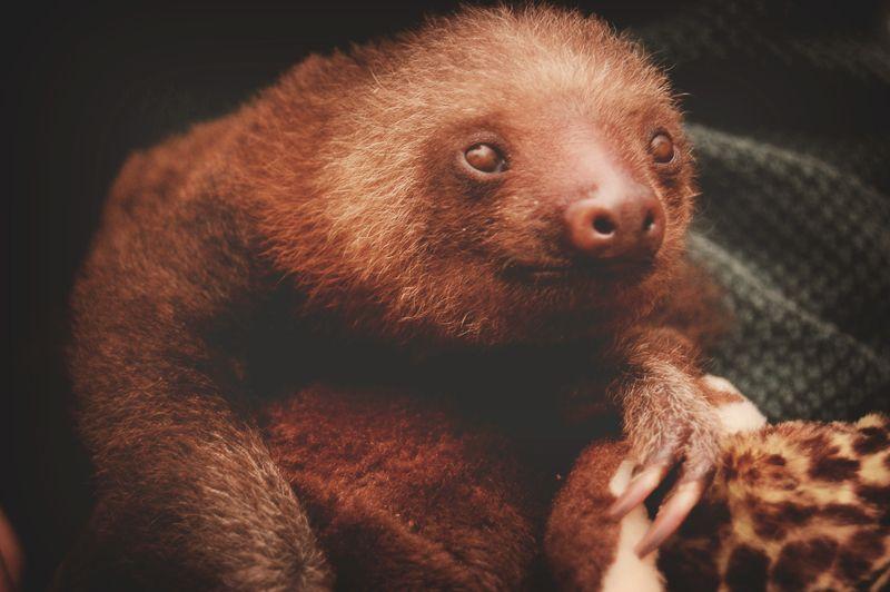 4 sloth