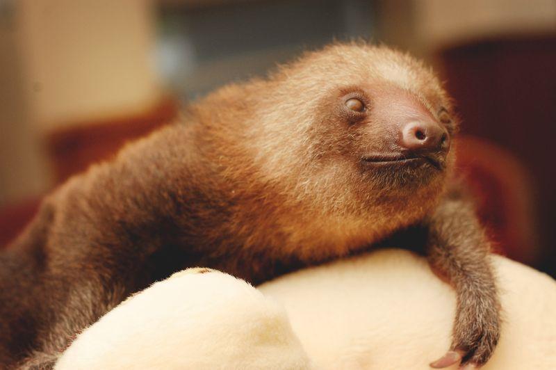 6 sloth