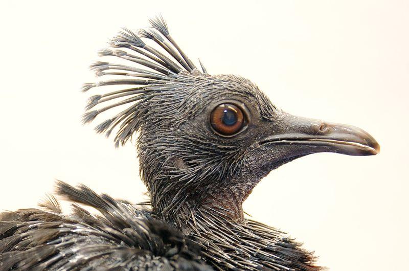 3 pigeon
