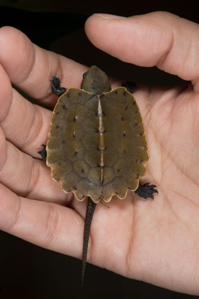 2 turtle