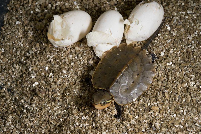 4 turtle