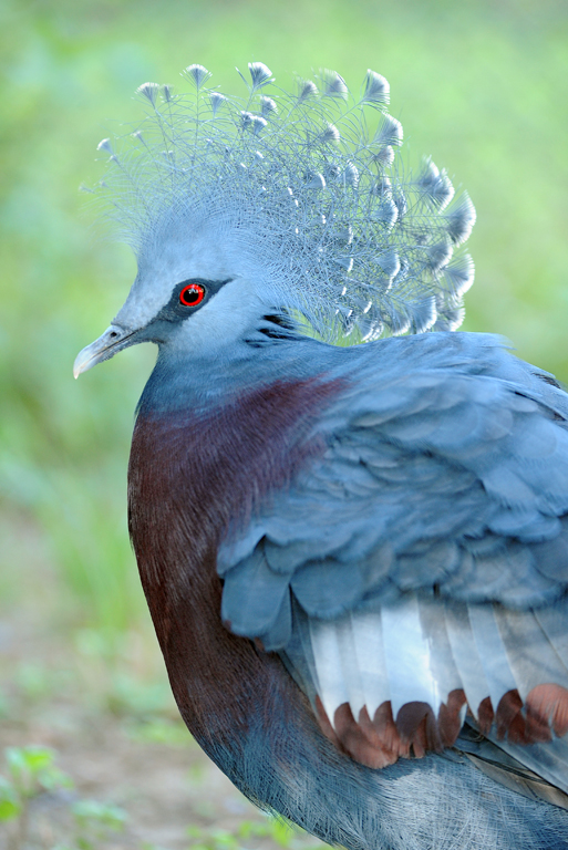 6 pigeon
