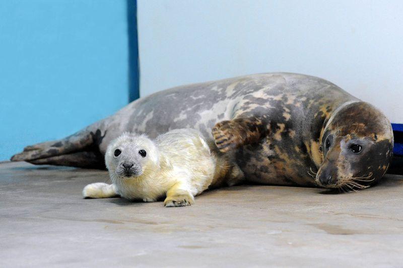 4 seal