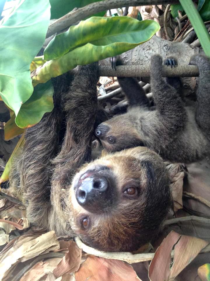 2 sloth