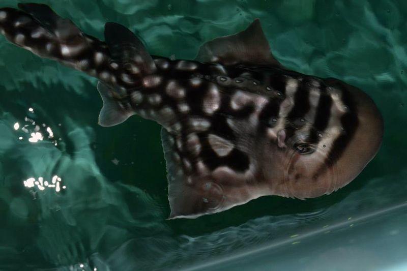4 sharkray
