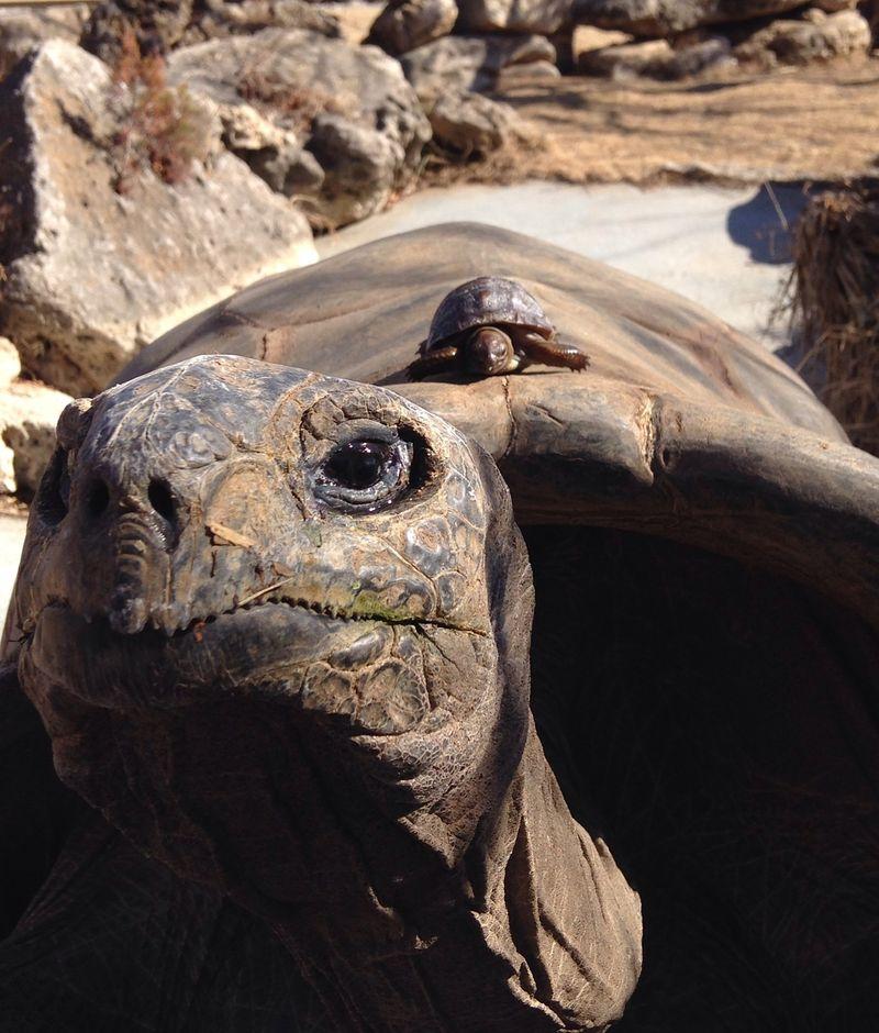 5 tortoise (Sarah Floyd)