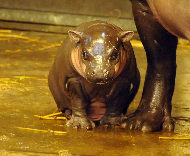 3 hippo