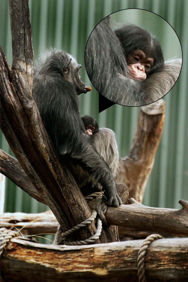 _MG_2653-ZooBorns-large