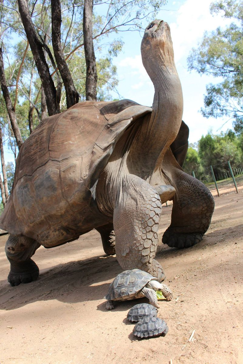 1 tortoise