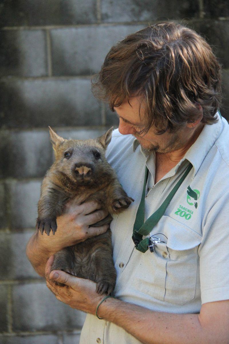 5 wombat