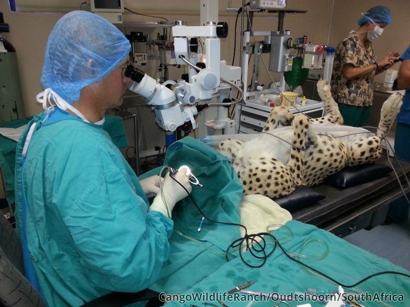 Venus Surgery