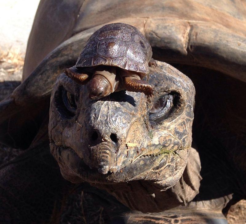 2 tortoise (Sarah Floyd)