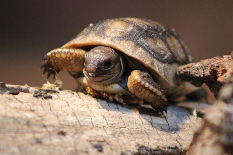3 tortoise (Aaron Goodwin)