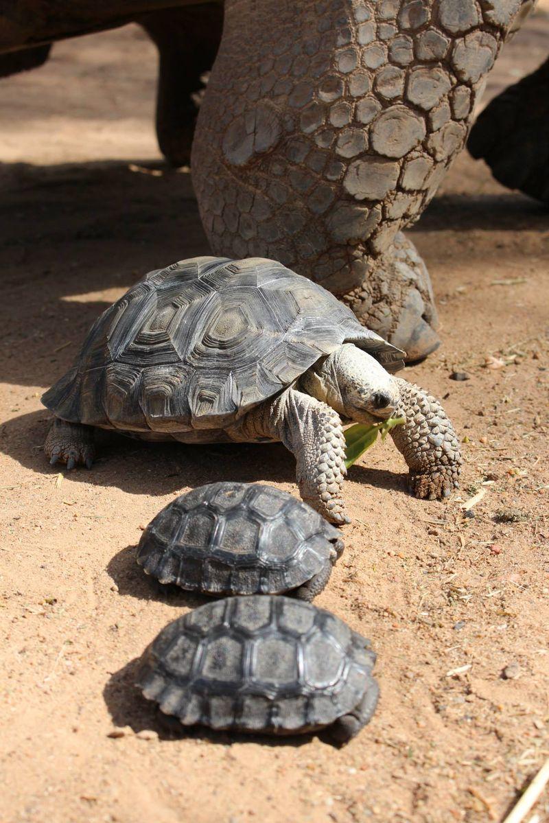 2 tortoise