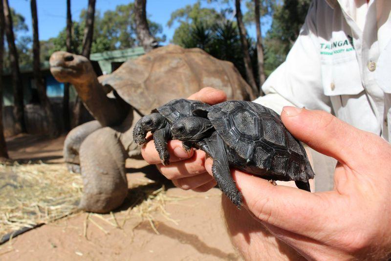 3 tortoise