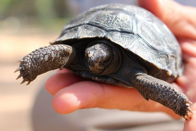5 tortoise