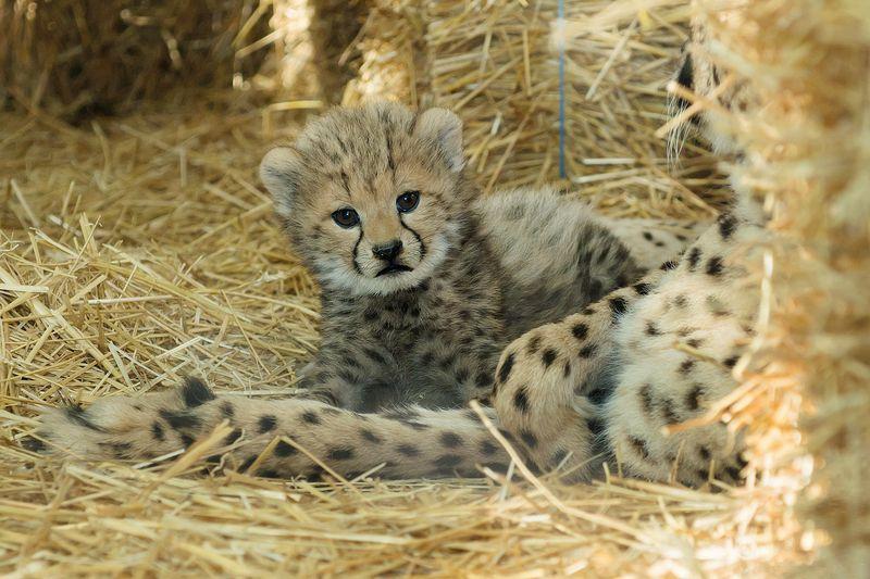 Gepard_13_TGS_Zupanc