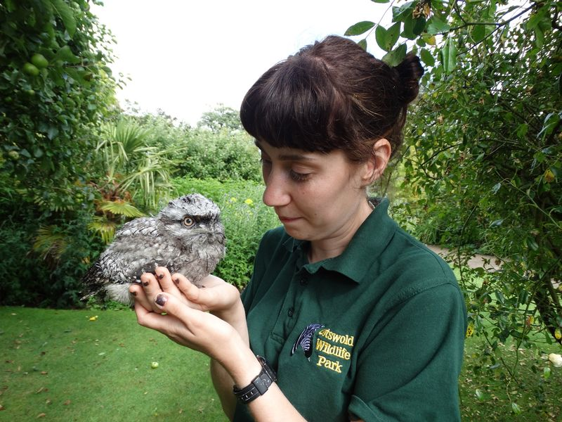 DR-Frogmouth-with-Jade-1