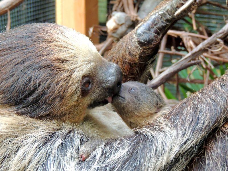 Sloth Boston_1