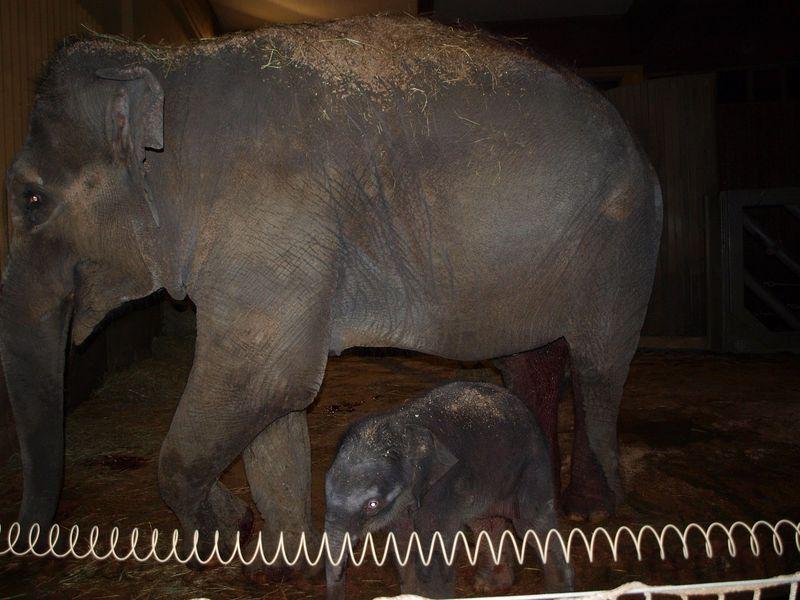 3 elephant