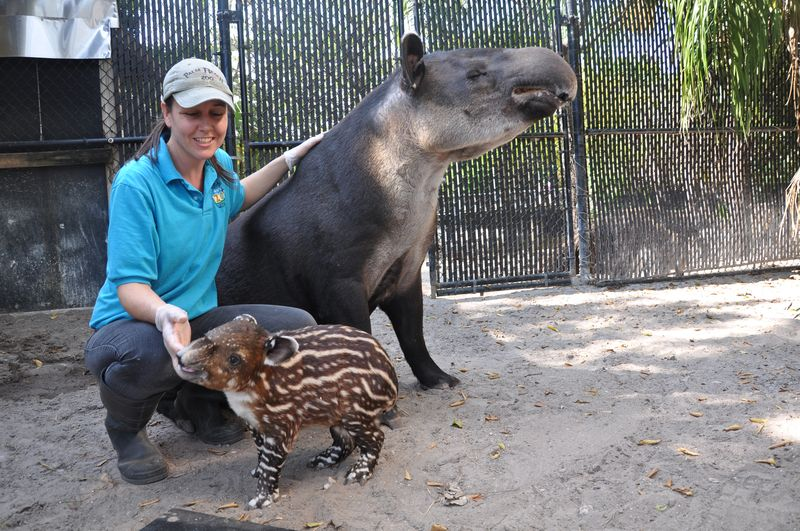 Keeper April Winters with tapirs
