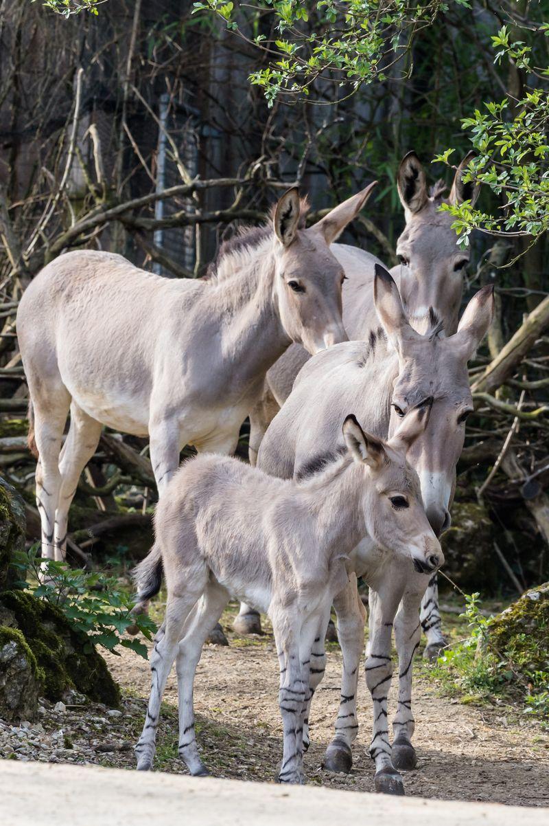13 foal