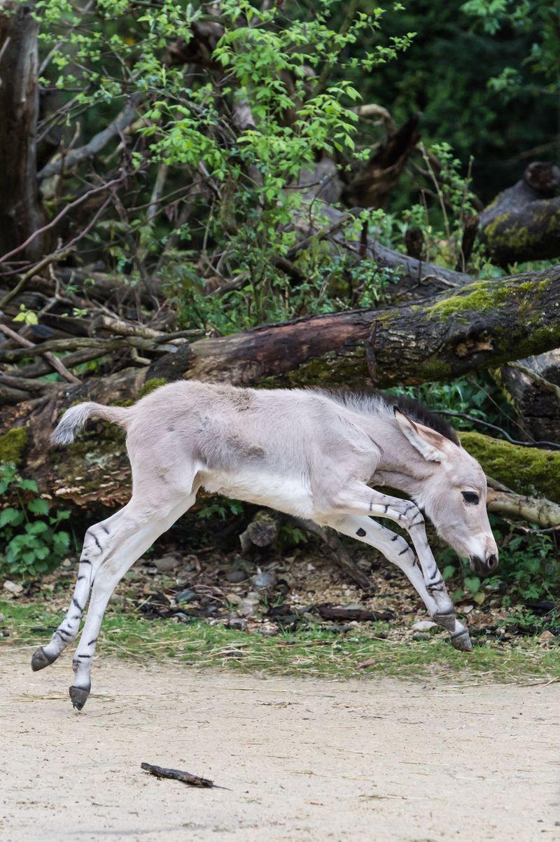 10 foal