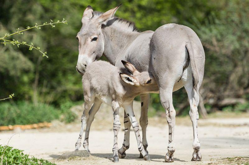 3 foal