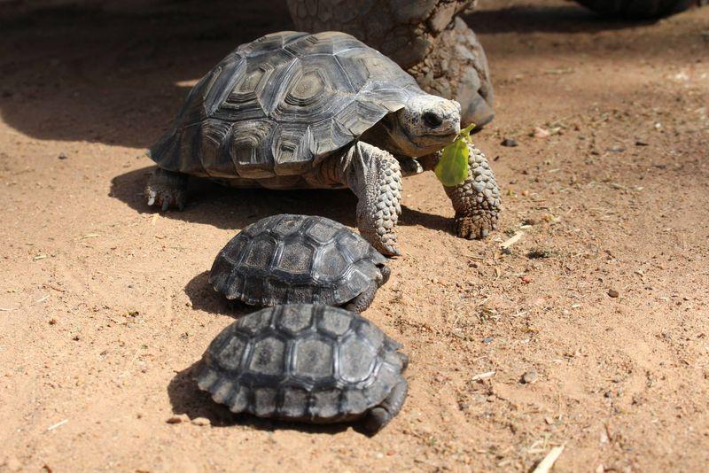 4 tortoise