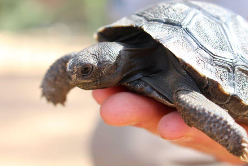 6 tortoise