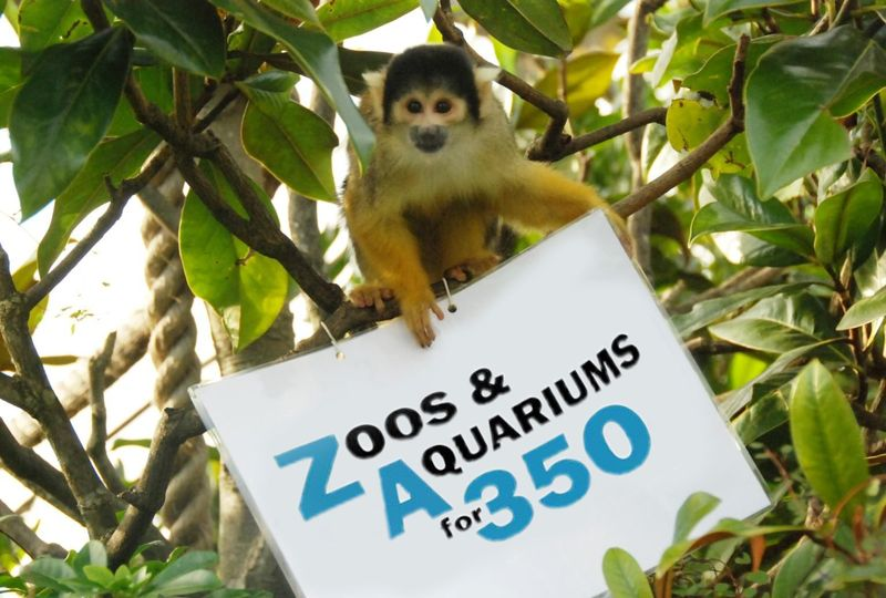 Squirrel monkeys for 350