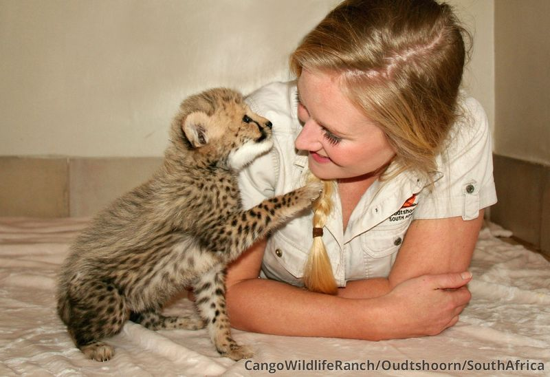 Cub with Caregiver