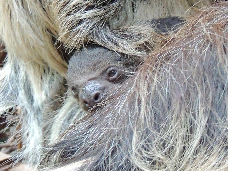 Sloth Boston_4