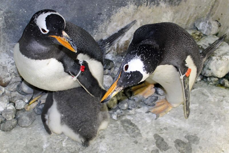 Bug and Big T with Gentoo Chick 2