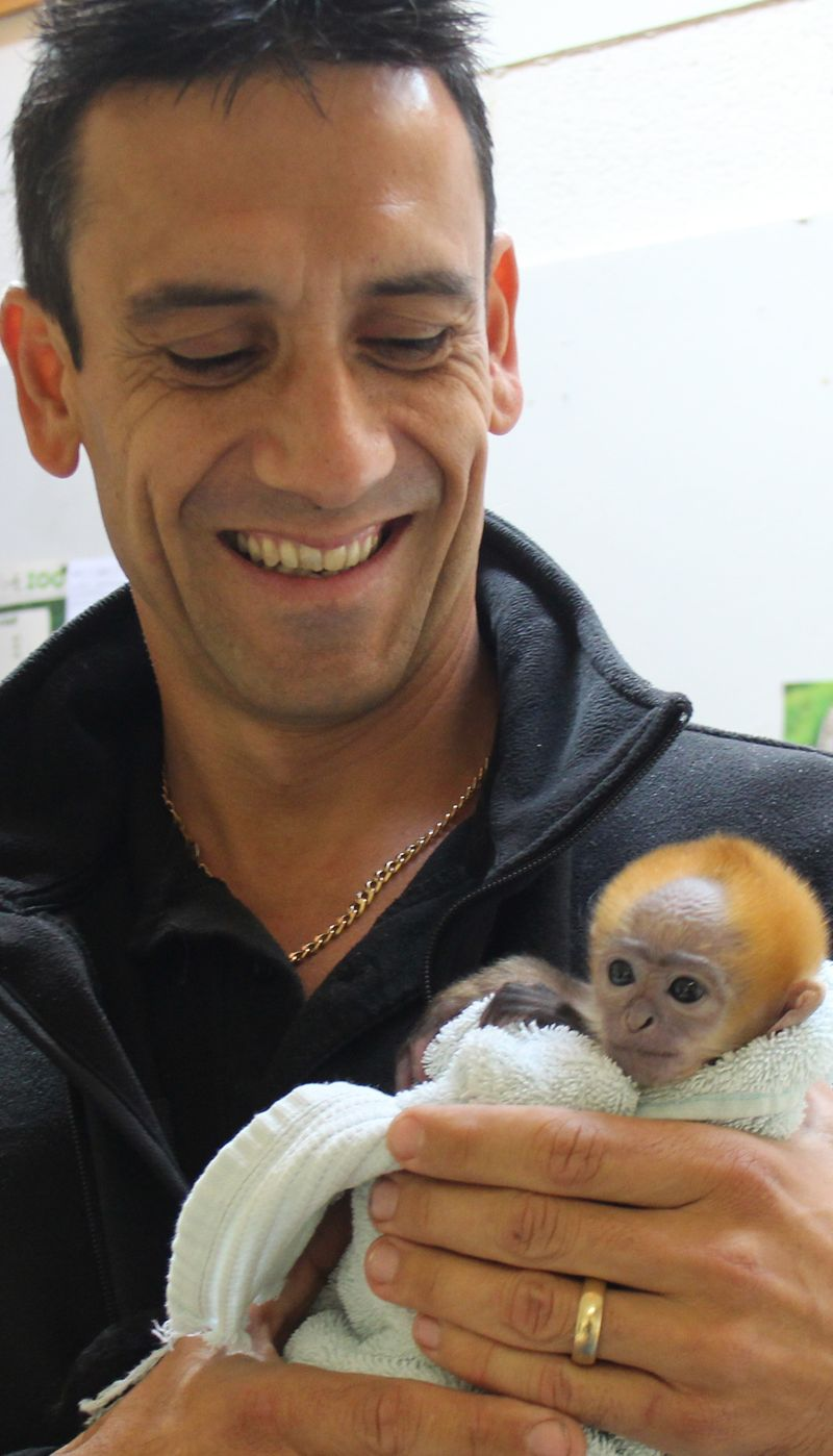 (3)  Andrew has been instrumental in hand-rearing the langur, taking him home to ensure 24 hour care and regular feeding every few hours.