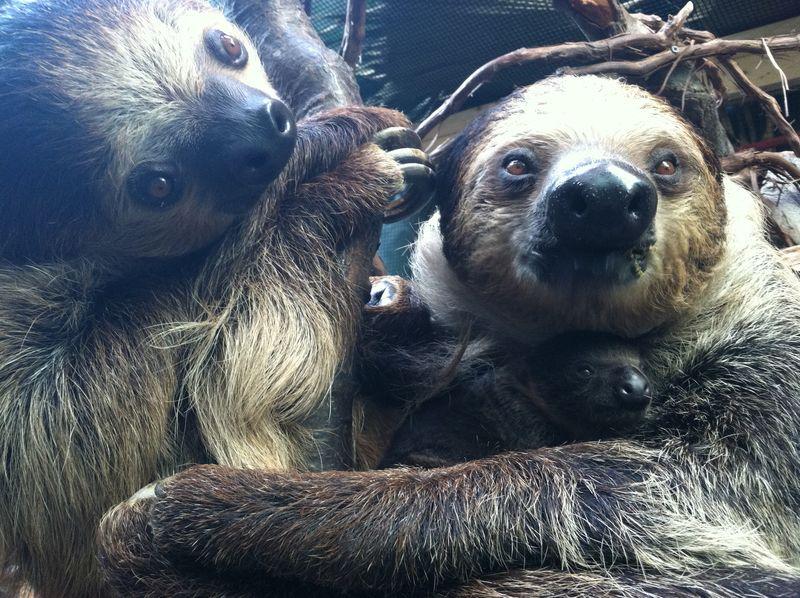 Sloth Boston_7