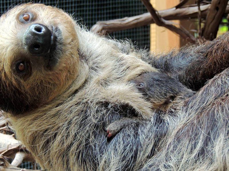 Sloth Boston_2