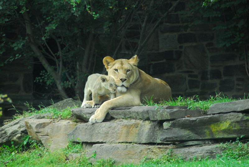 PhillyZooLionCubs_2