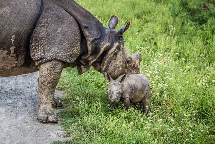 Rhino calf at the Wilds 002, Jeff Hammer