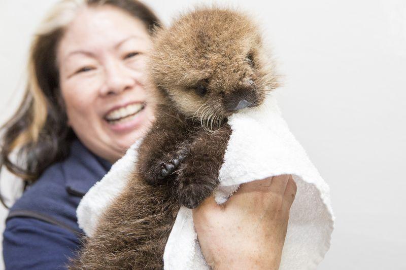 Shedd_Sea Otter Pup_10