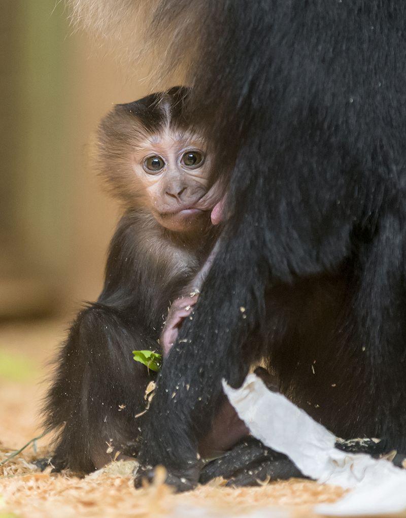 1 macaque