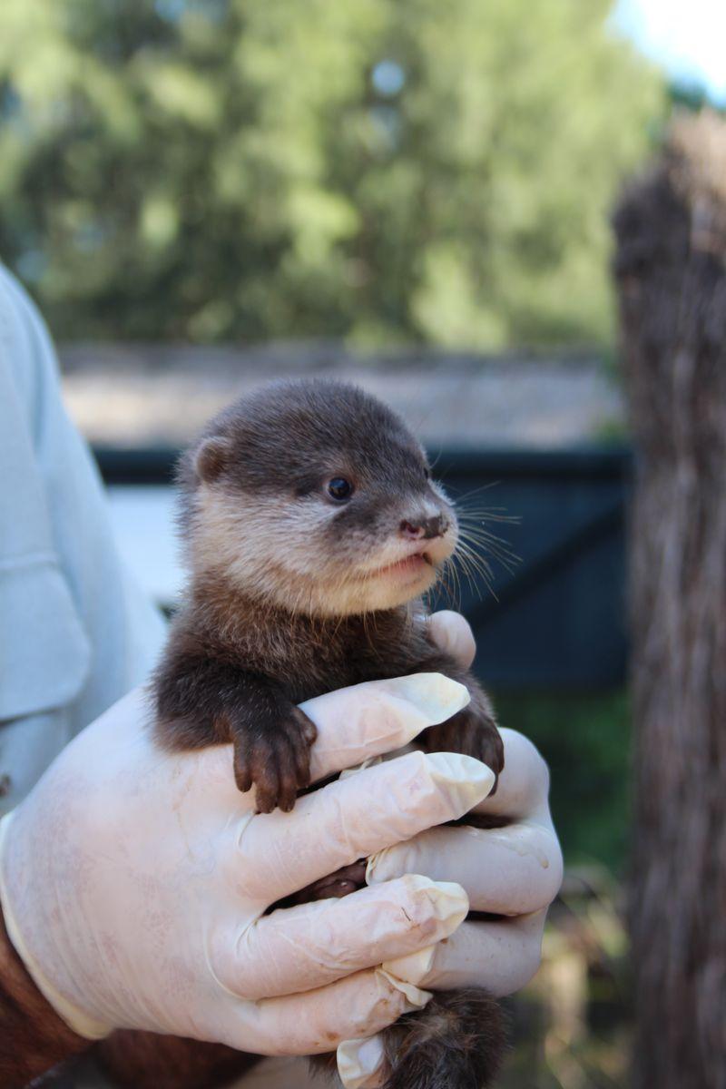 Otter pups_6.3.15_MT (3)