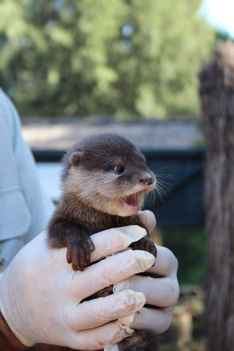 Otter pups_6.3.15_MT (4)
