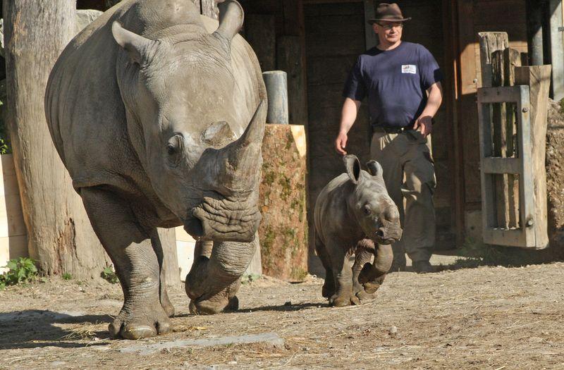 ZooSalzburg_Rhino_3