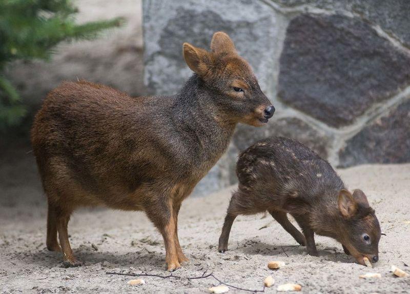 Csm_Pudunachwuchs_Zoo_Berlin_April_2015_Karl_Broeseke_5c1c4fe6bd