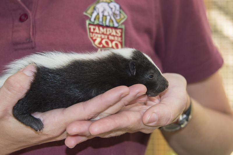 4_florida boardwalk skunk kit 3 may 29 2015