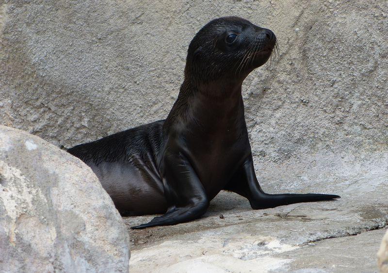 5 seal