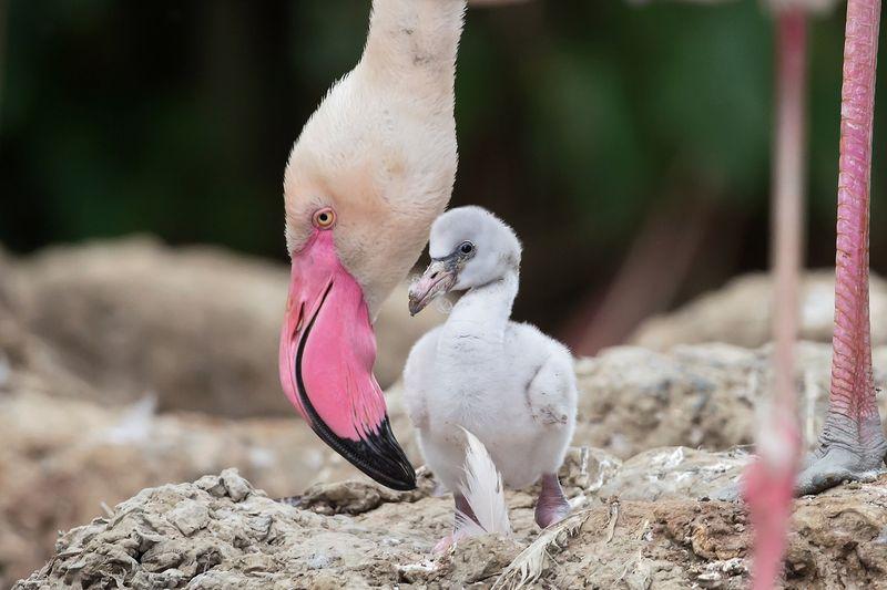 1 flamingo