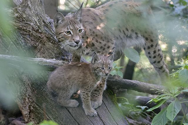 20150716_084152_Zoo_Vienna_DxO
